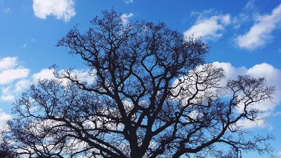 Tree Blue Sky Blue Clouds Clouds And Sky White White Clouds Shilhouette King's Lynn Sunny Day Walking Around