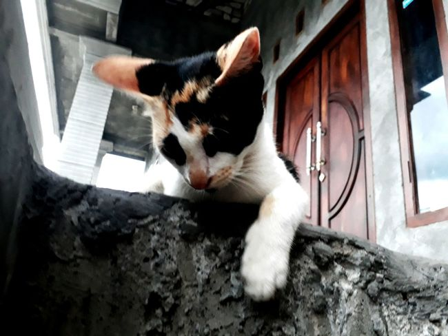 Domestic Cat Pets Domestic Animals Feline One Animal Window Indoors  No People Animal Themes Day Mammal Close-up
