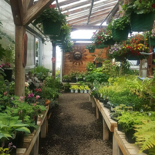 View of potted plants