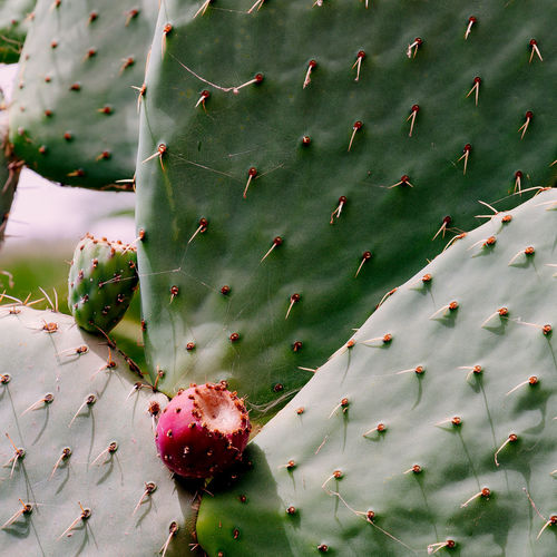 Cactus close up. cactus lover concept