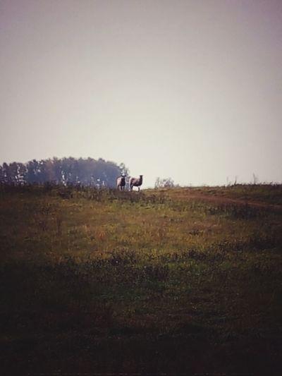 sheeps Hill