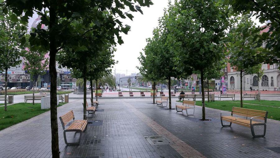 Katowice Tree