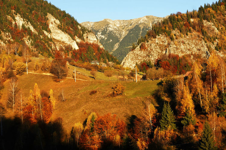 Scenic view of trees and mountains during autumn
