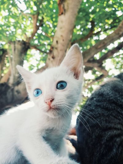 Puteh PhonePhotography Mobilegraphy Huaweiphotography Huaweinova2i Cats Of EyeEm Animal Themes Catgraphy Pets Portrait Kitten Feline Domestic Cat Looking At Camera Cute Whisker Friendship Close-up Animal Eye Cat Animal Face Eye Eye Color