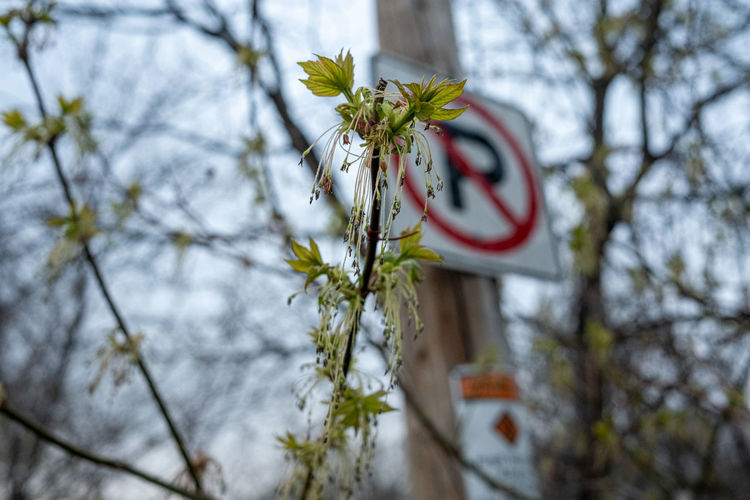 Low angle view of flower on tree