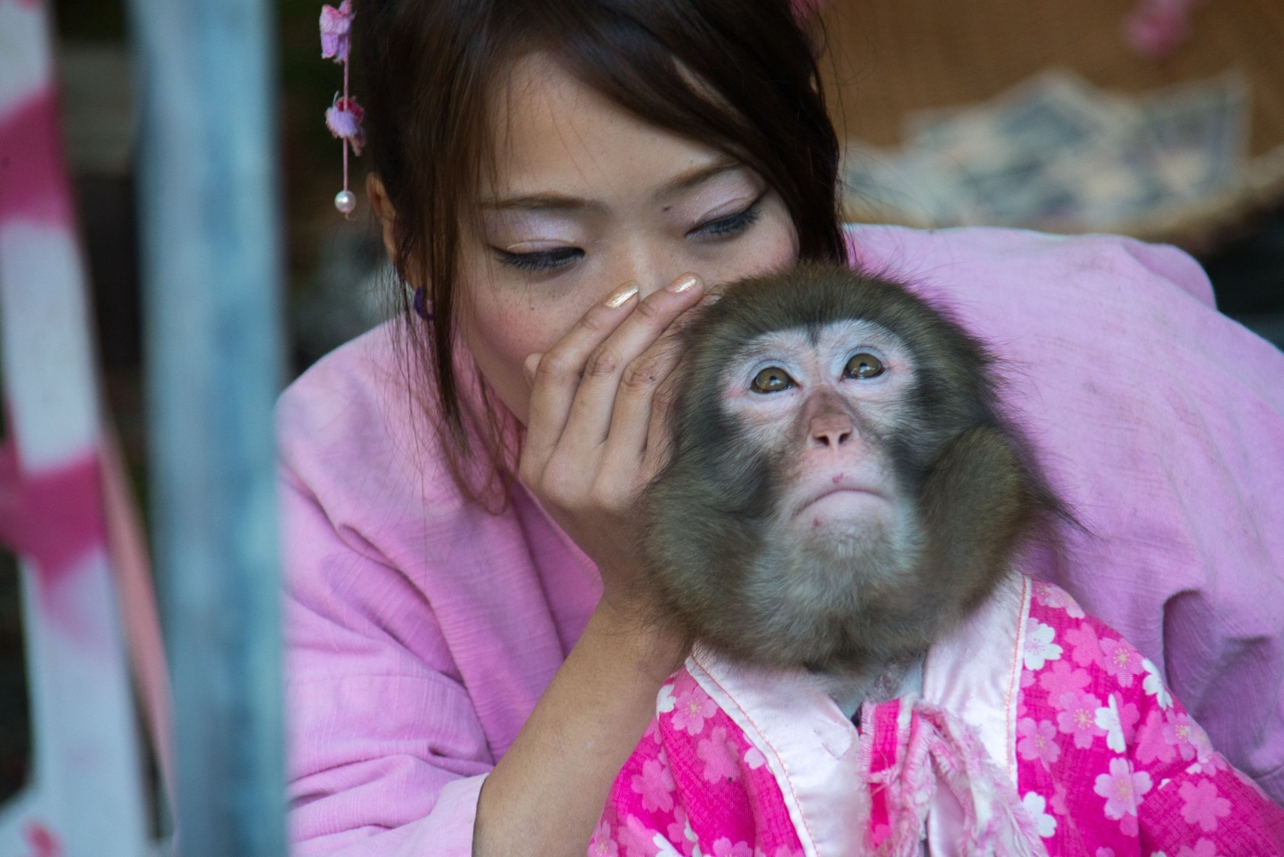 animal themes, one animal, cute, portrait, focus on foreground, looking at camera, person, innocence, elementary age, close-up, childhood, front view, headshot, smiling, one person, mammal, sitting, pets, monkey