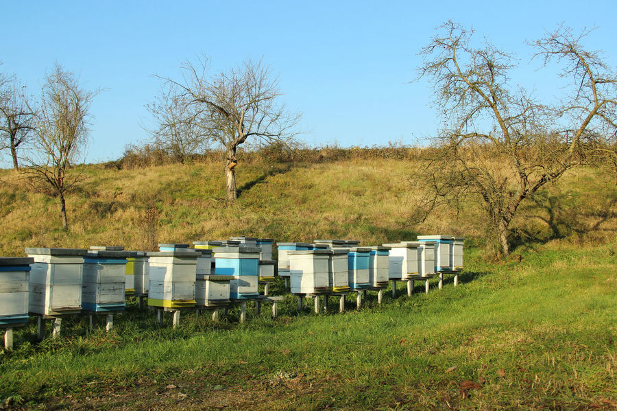 Beehives Agriculture Bees Field Honey Bees  Nature Rural Apiary APIculture Bee Beehive Beehives Beekeeping Countryside Hive Honey Honey Bee Insect Outdoor Pollen Pollenation Wooden
