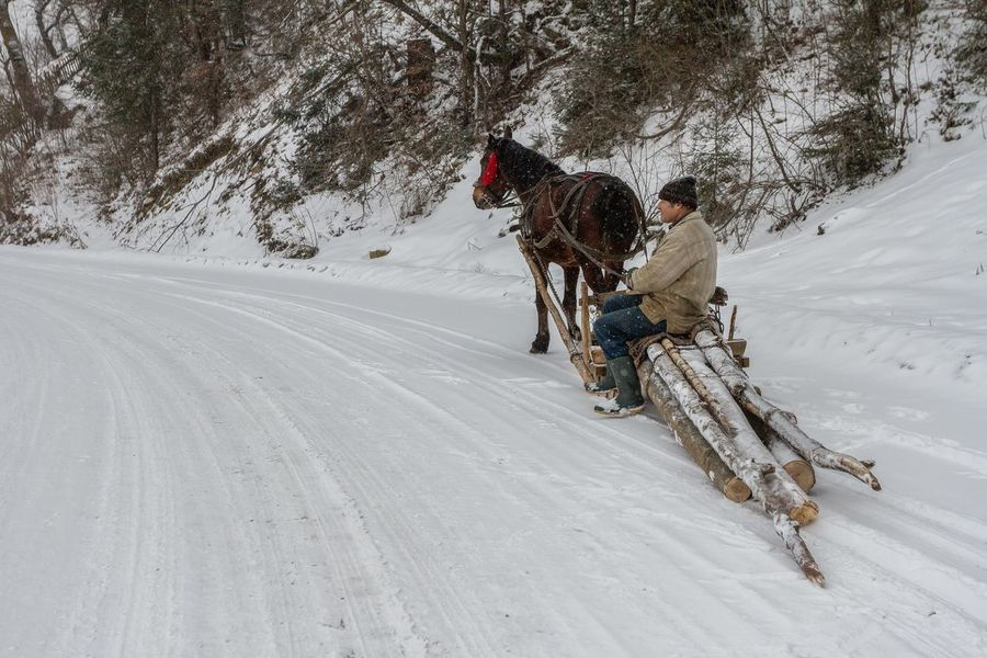 Bukovina Carpathian Nature Horses Romania Sleigh Tranquility Winter Adventure Cold Temperature Domestic Animals Full Length Horse Leisure Activity Mammal Nature Outdoors Real People Riding Rural Scene Sleighride Snow Transportation Tree Village Winter