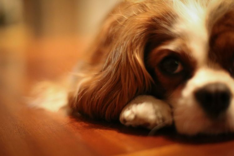 Hello World EyeEm Best Shots From My Point Of View Canonphotography Home Sweet Home Salt Lake City Kingcharlescockerspaniel