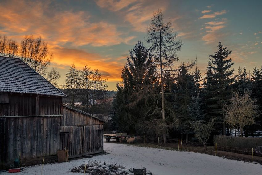 A look outside... Sunset Tree House Built Structure Nature Sky Outdoors No People Winter Cold Temperature Cloud - Sky Architecture Beauty In Nature Day Eos1300d Canon EOS 1300D Landscape Tranquil Scene Tree Sunlight Canonphotography Canon Winter Snow