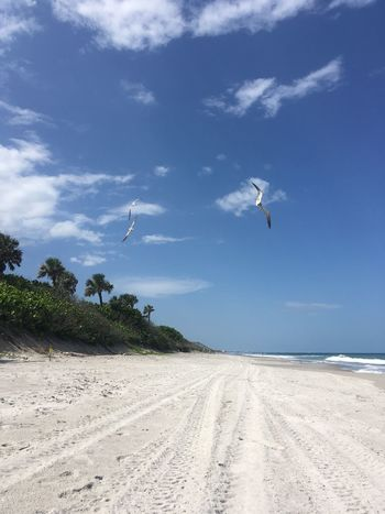 Sand Beach Sky Nature Mid-air Flying Tranquil Scene Sea Cloud - Sky Day Scenics Beauty In Nature Outdoors The Way Forward Tranquility Blue No People Animal Themes Landscape Seagull
