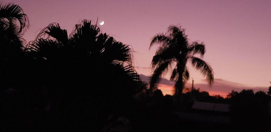 Pink Sky at