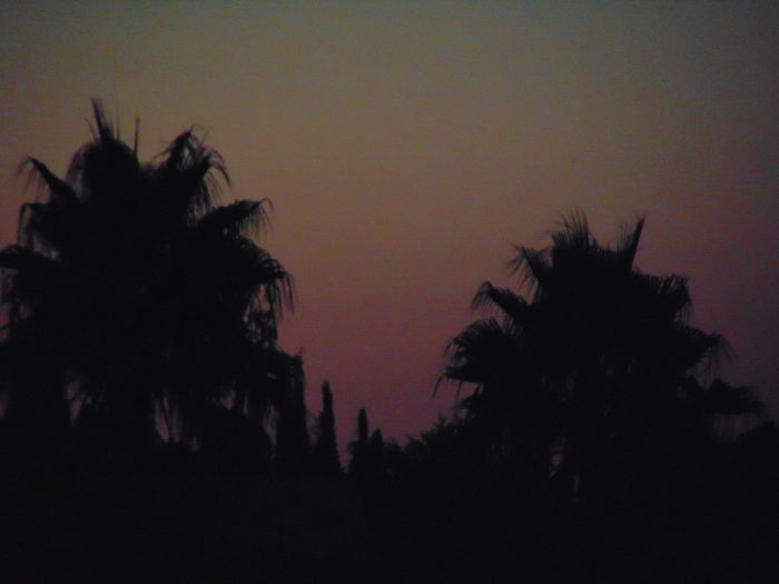 Tree Silhouette Dusk Outline Sunset Scenics Palm Tree Tranquility Tranquil Scene Clear Sky Nature Dark Beauty In Nature Sky Growth Outdoors No People Majestic Solitude Palm Frond Dark Clear Sky Cefalù2016 Balconyview Star