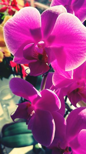Taking Photos My Art Nature Plant Orchidee Orchids Love