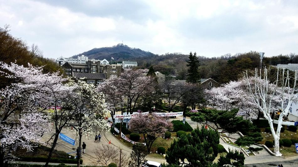 Enjoying The View View Yonsei YonSei University South Korea