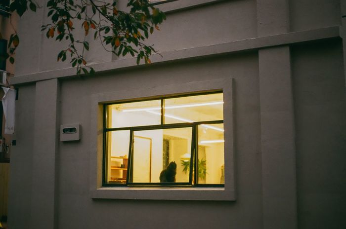 Window Cat Tree No People Cat Lovers Built Structure Building Exterior Architecture First Eyeem Photo