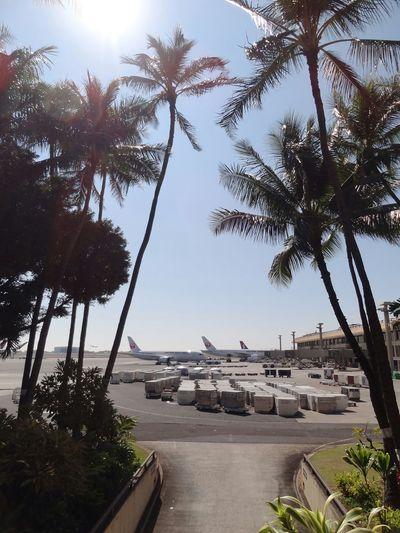 Honolulu  Hawaii Airplane Airport Honolulu Airport Palm Trees