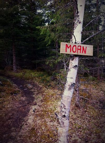 Norwegian names of places out in the wood... Wood Signs Path Trees Nature Norway