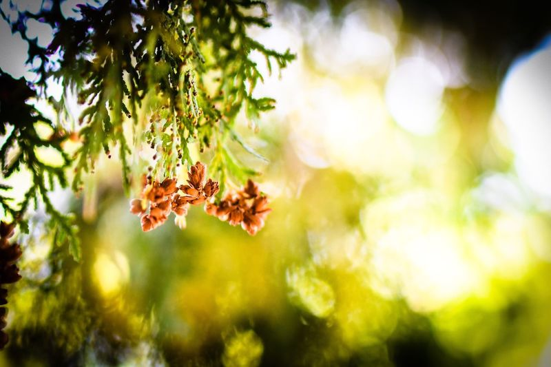 My back yard Nature Tree Close-up Outdoors No People Beauty In Nature Sunlight Branch Plant Growth Leaf Day Freshness Fragility bokeh