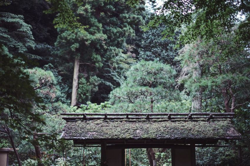 Japan Snap Light And Shadow Vscocam VSCO Streetphotography Tree Plant Growth Built Structure Architecture Forest Nature