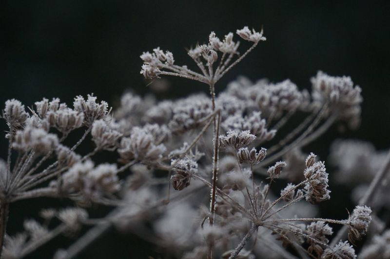 Plant Flowering Plant Growth Flower Nature Beauty In Nature Winter