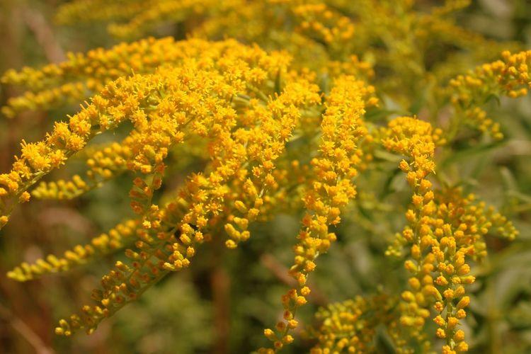 Plant Nature Flower Plant Part Outdoors Beauty Beauty In Nature Flower Head HJB Yellow Planzen Blumen Natur