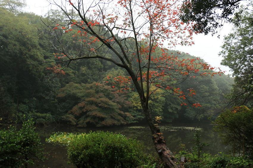 ここが渋谷区だとはとても思えない。 明治神宮 明治神宮御苑 Urban Forest Urban Landscape Landscape_photography Japan Japanese Shrine Japanese Traditional Forest Rain Forest Rain EyeEm Best Shots