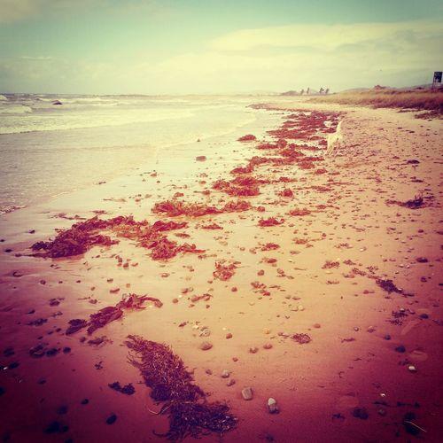 Relaxing Beach Landscape Good Morning
