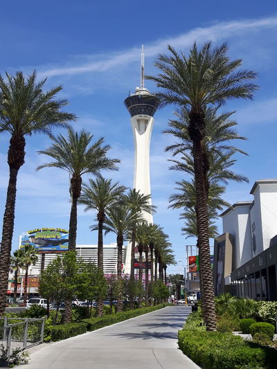 Stratosphere Blue Sky Palm Trees Tower Architecture Stratosphere Tower Stratosphere Hotel Skyjump I Jumped Off! Sidewalk Streetphotography