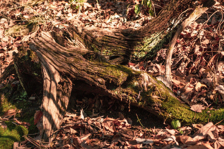 View of tree trunk in forest