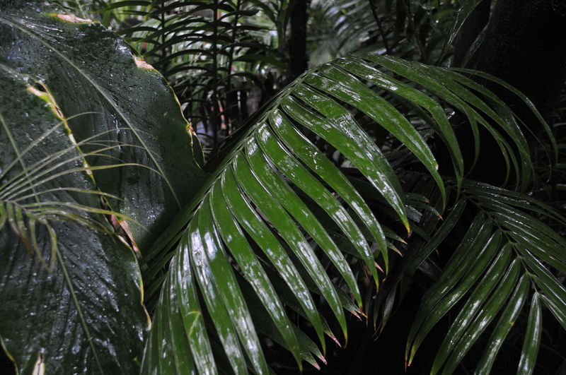 Kew Gardens Beauty In Nature Close-up Day Drop Freshness Green Color Growth Leaf Leaves Nature No People Outdoors Palm House Palm Leaf Palm Tree Plant Plant Part RainDrop Rainforest Tranquility Tree Tropical Climate Water Wet