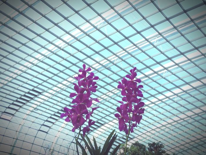 Orchids Orchidslover Metal Structure Glass Building Singapore
