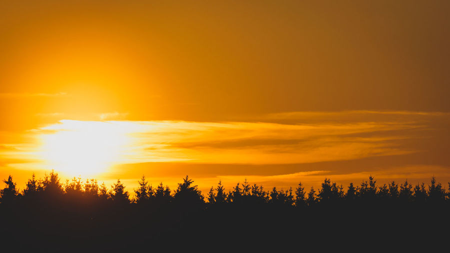 Sunset Sky Orange Color Beauty In Nature Tranquility Scenics - Nature Tree Tranquil Scene Silhouette Sunlight Nature Sun Idyllic Plant No People Non-urban Scene Landscape Forest Yellow Environment Outdoors WoodLand Pine Tree EyeEm Best Shots EyeEm Nature Lover EyeEm Gallery My Best Photo