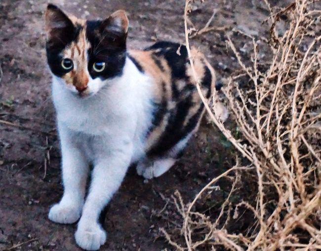 A chance meeting 😼 встреча Cat Animals Cat Portrait Enjoying Life Autumn Meeting Friends 😻😀