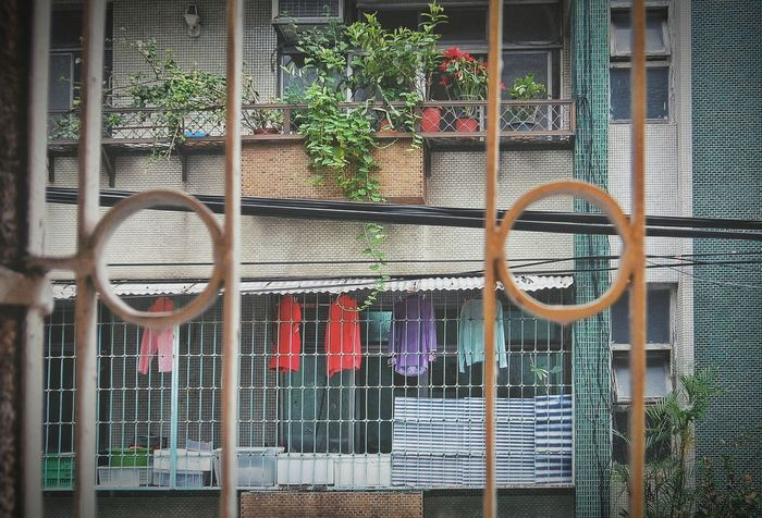 Study Abroad 🌴 My Memories Old Apartment Old-fashioned Tile My Room Window View From My Point Of View Window 窓萌 Colorful Laundry Lifestyles Flowers Plants Plants And Flowers Nostalgia Nostalgic Landscape Eye4photography  EyeEm Best Shots EyeEm Gallery The OO Mission My Favorite Place 大坪林文化路 in Xinbei,taiwan