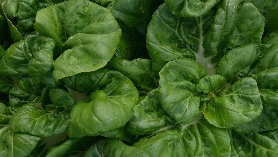 fresh Pak Choy Leaf Backgrounds Full Frame Vegetable Close-up Plant Green Color Vegetable Garden Plant Life Homegrown Produce
