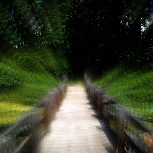 Landscape EyeEm Best Shots EyeEm Nature Lover Vanishing Point