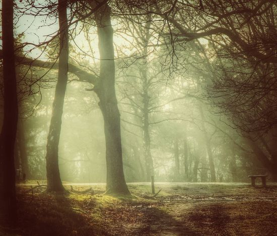 Fog Tree Forest Nature WoodLand Mystery Beauty In Nature Tree Trunk Trough The Trees Forest Photography ForTheLoveOfPhotography Canonphotography Trough The Lens Eos70d EyeEmNewHere Canon_photos Canon EOS 70D Breathing Space The Week On EyeEm EyeEm Selects Loving Nature No People Outdoors Hazy Days Sun Rays Through Trees