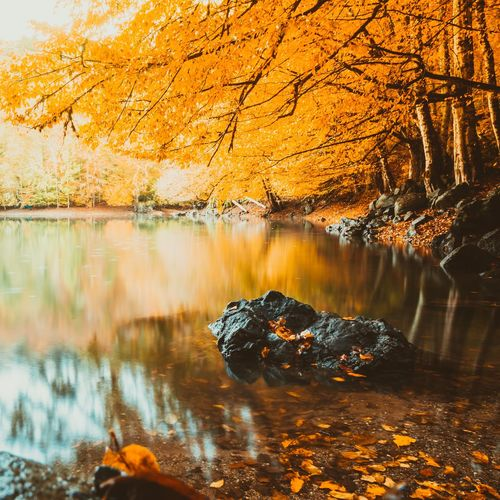 Autumn landscape view in a lake Water Lake View Dark Leaves Leaf Rock Stone Turkey Yedigoller Tree Forest Pond Reflections EyeEm Selects Yellow Reflection Water Nature Lake Tree Outdoors Beauty In Nature Autumn Scenics Leaf No People Forest Day Sky
