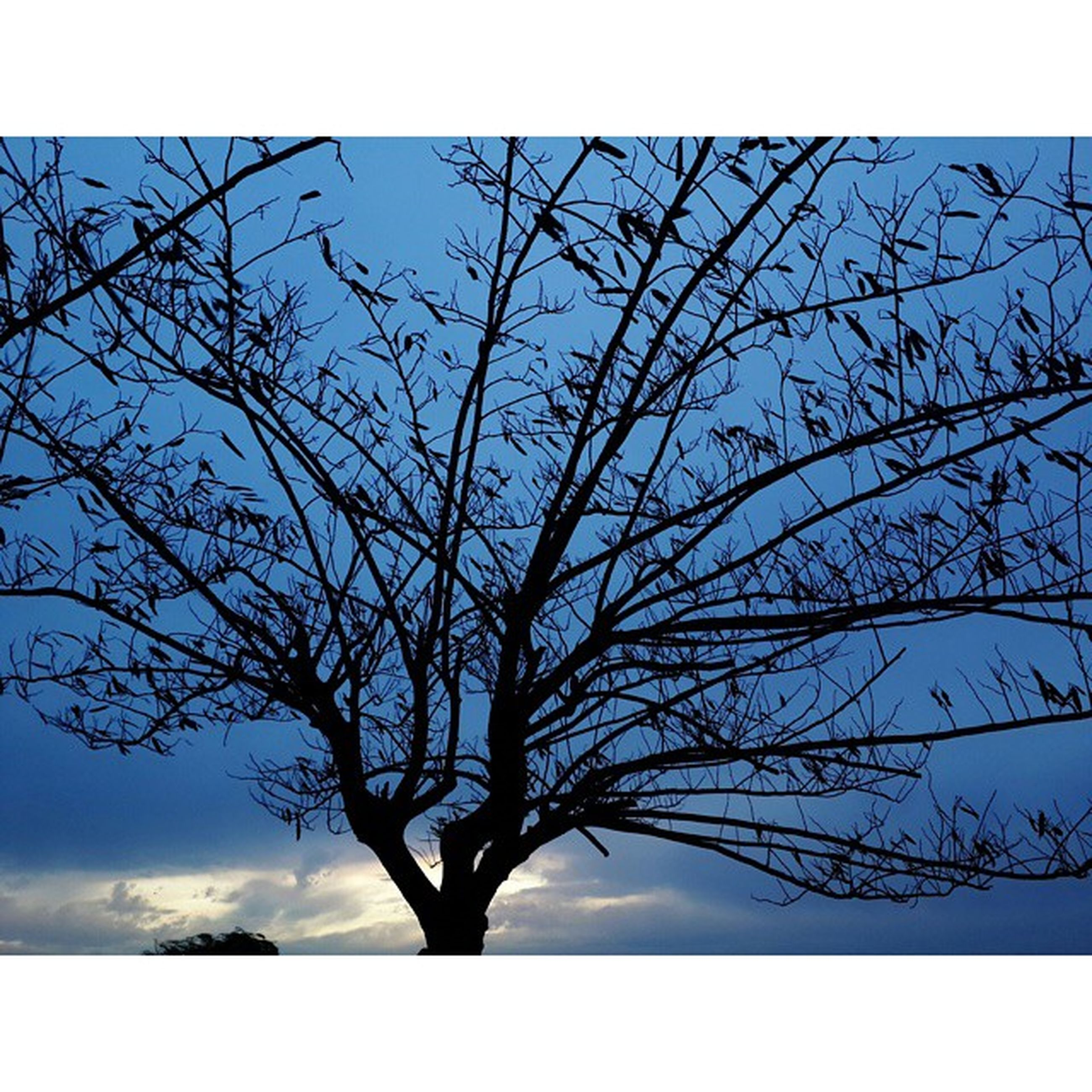 low angle view, bare tree, tree, branch, sky, silhouette, transfer print, tranquility, nature, beauty in nature, auto post production filter, scenics, clear sky, blue, growth, single tree, tree trunk, outdoors, no people, day