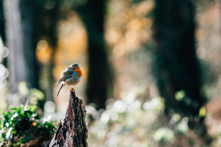 forest walk | with a bird! Animal Themes Animal Wildlife Animals In The Wild Beauty In Nature Bird Day Forest Nature No People One Animal Outdoors Perching Robin Robin Redbreast Sitting Tranquility Trees