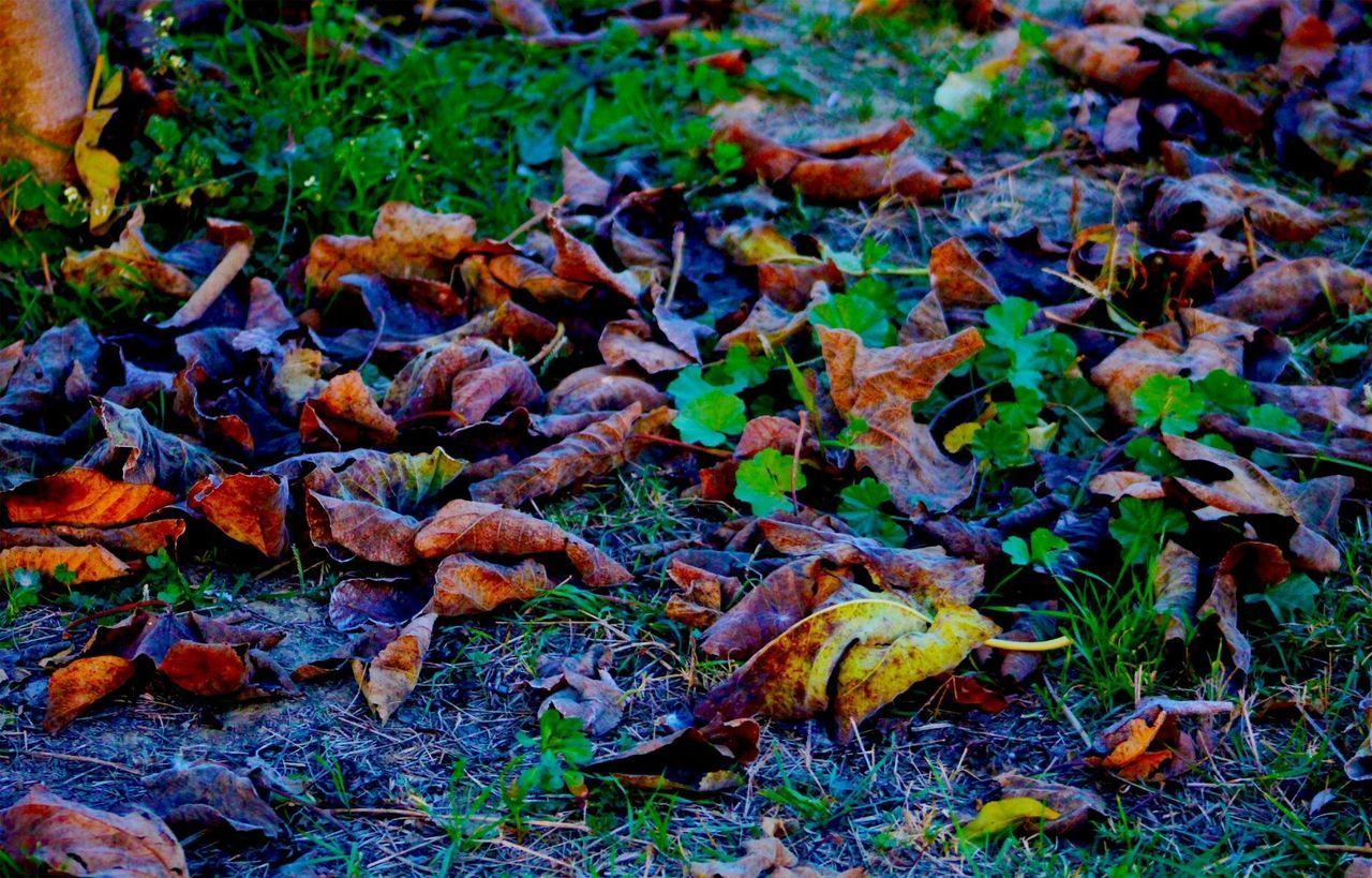 HIGH ANGLE VIEW OF LEAVES FALLEN ON FIELD
