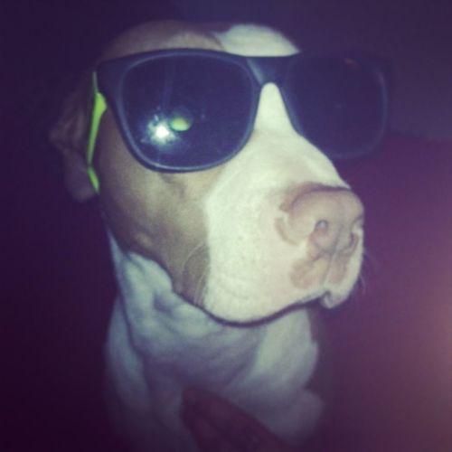 Little miss ayon! She's a balla :) Rednose  Pitbull Cutie Lovemypuppys