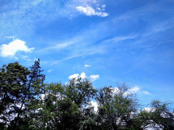 blue sky on the park Sky Park Blue Sky Blue Sky White Clouds Blue Sky On The Park Sky And Clouds Sky And Park Tree Blue Branch Sky