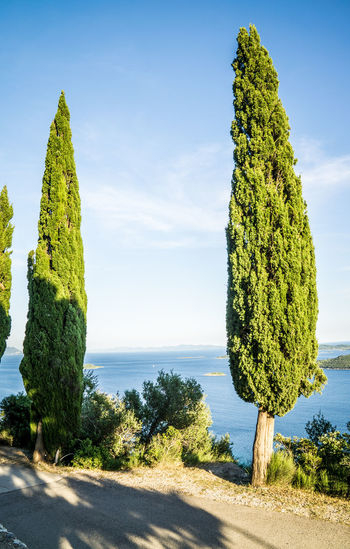 Sea view with trees Beach Blue Croatia Day Horizon Over Water Nature No People Orebic Outdoors Sea Sky Tree Water
