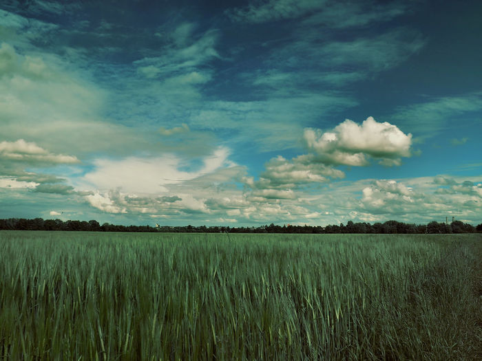 Agriculture Beauty In Nature Cloud Cloud - Sky Crop  Cultivated Land Day Field Grass Grassy Green Color Growth Horizon Over Land Idyllic Landscape Nature No People Outdoors Plant Remote Rural Scene Scenics Sky Tranquil Scene Tranquility