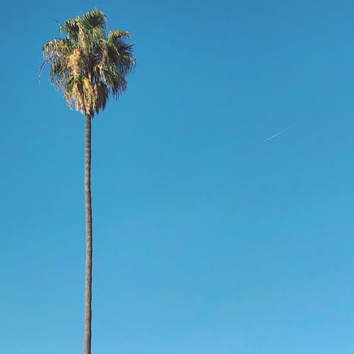 Palm tree at 65', airline at 37,000'. Airplane Copy Space Day Outdoors No People