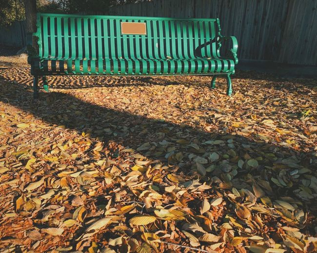 """""""Vacancy"""" An empty park bench in a local suburban park calls out for companionship on a cool Autumn afternoon. Parks Park Suburban Exploration Lonely Park Bench Autumn Leaves Fall Leaves Sunlight No People Bench Day Autumn Empty Absence Seat Shadow"""