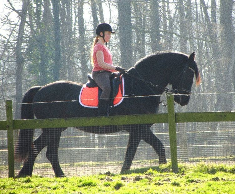 Riding lesson Horse Paddock Spring Sunshine Riding Lesson Open Edit