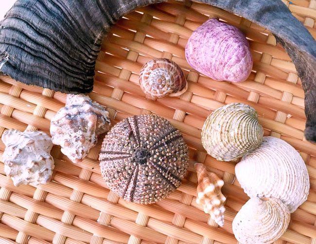 Variety of seashells on wicker table